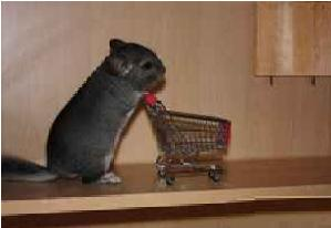 chinchilla shopping